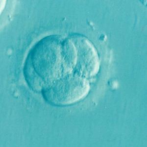 PGT-A: Análisis Genético del embrión